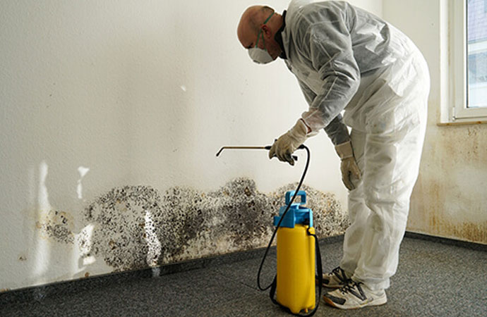 Code-Compliant Mold Removal & Remediation
