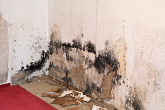 mold infestations