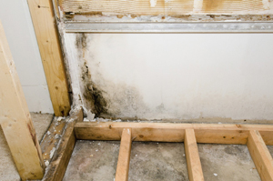Basement Mold Removal